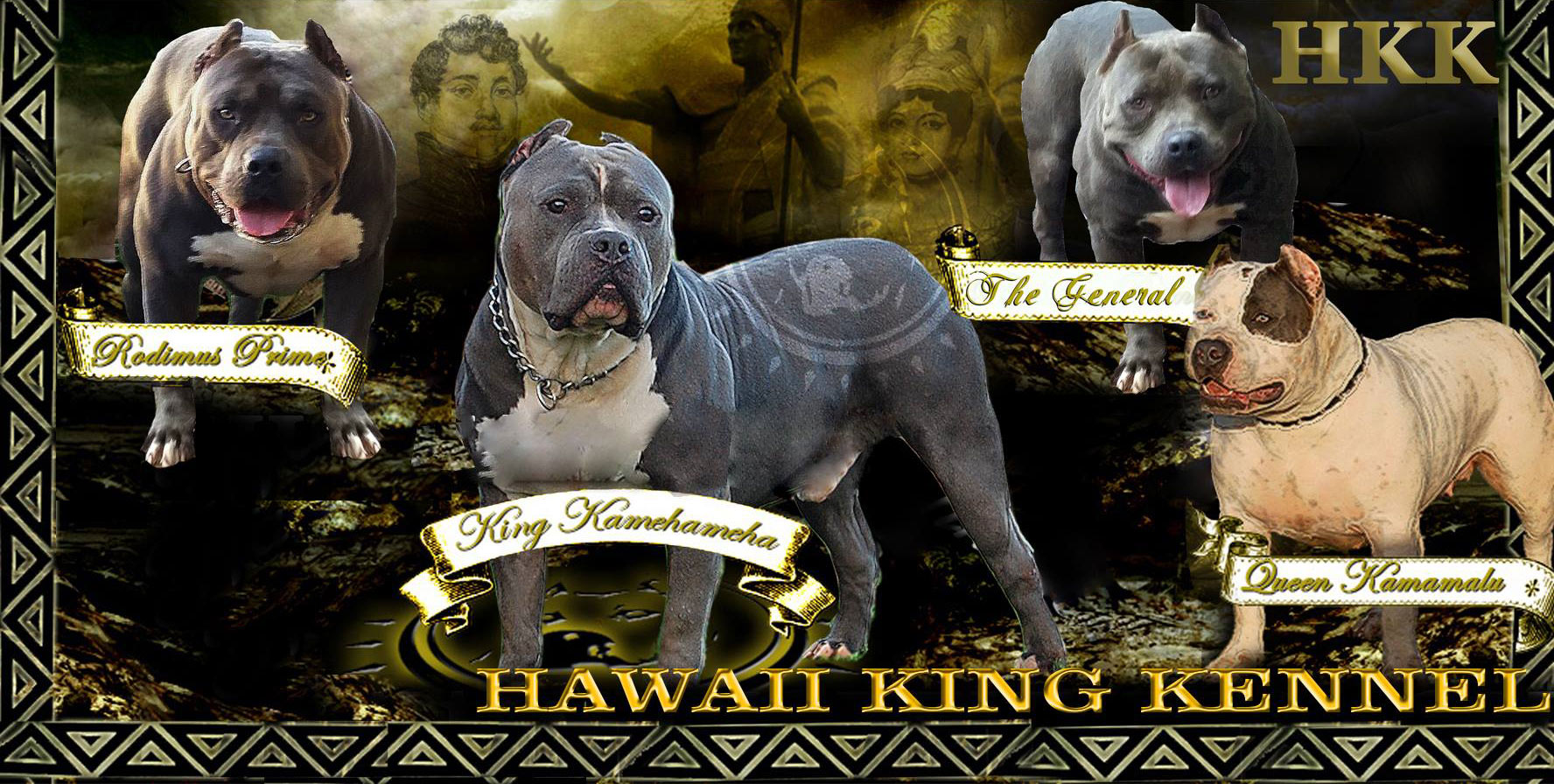 Blue Nose Pitbull Puppies For Sale | Hawaii King Kennels